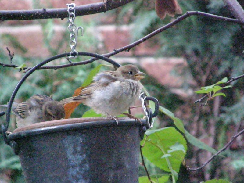 P9050548_Baby birds